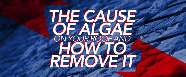 The Cause Of Algae On Your Roof And How To Remove It
